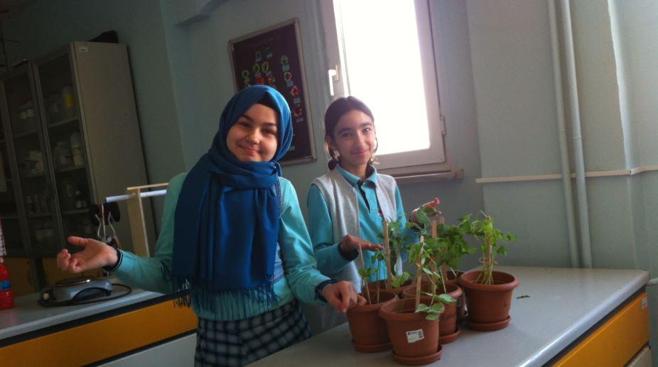 bitkiler12